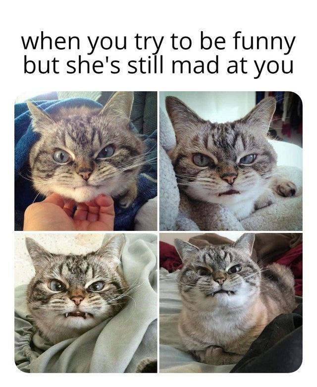 Xl Batch Of Pics And Memes To Cure The Monday Blues En 2021 Meme Gato Gatos Memes