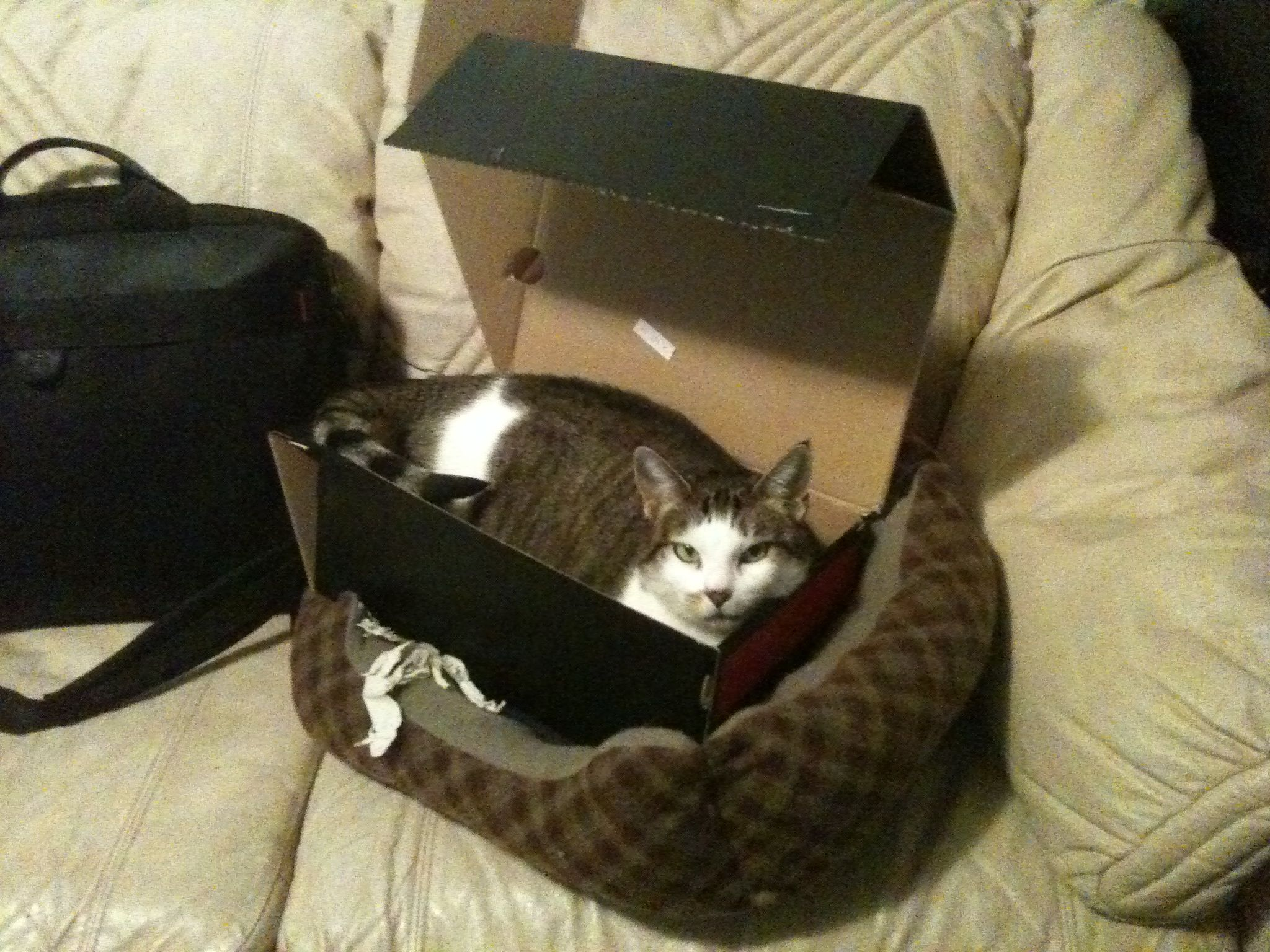 I Figured Out How To Get My Cat To Sleep In Her Expensive Bed Funny Animal Photos Funny Animal Pictures Cats