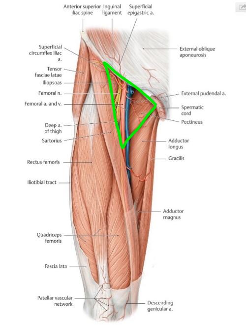 Tagged Anatomy Usmle Notebook Medschool Pinterest Anatomy