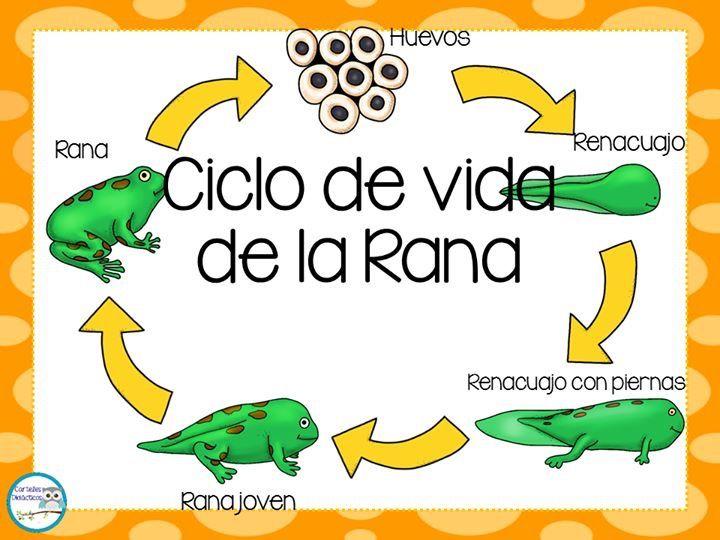Vistoso Ciclo De Vida De La Hoja De Trabajo De Una Rana Cresta ...