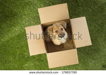 PET Rescue Stock Photos, PET Rescue Stock Photography, PET Rescue Stock Images : Shutterstock.com