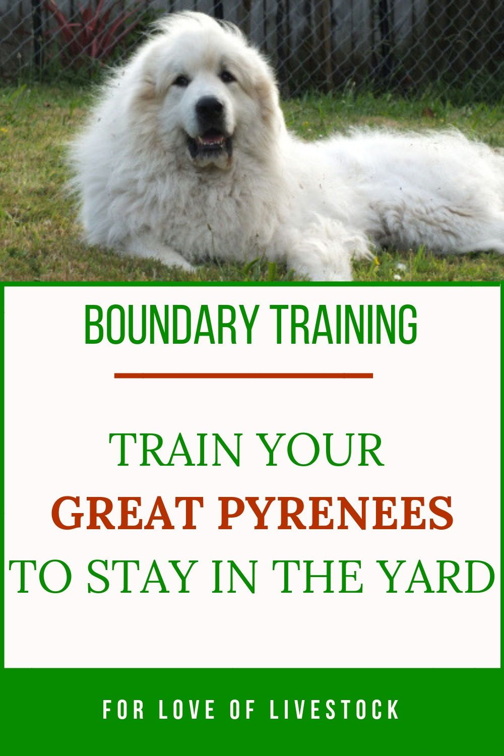 The Great Escape Artist Pyrenees How To Keep Your Pyr In The