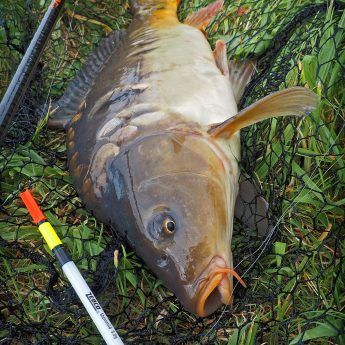 Photo of Carp fishing with a pose