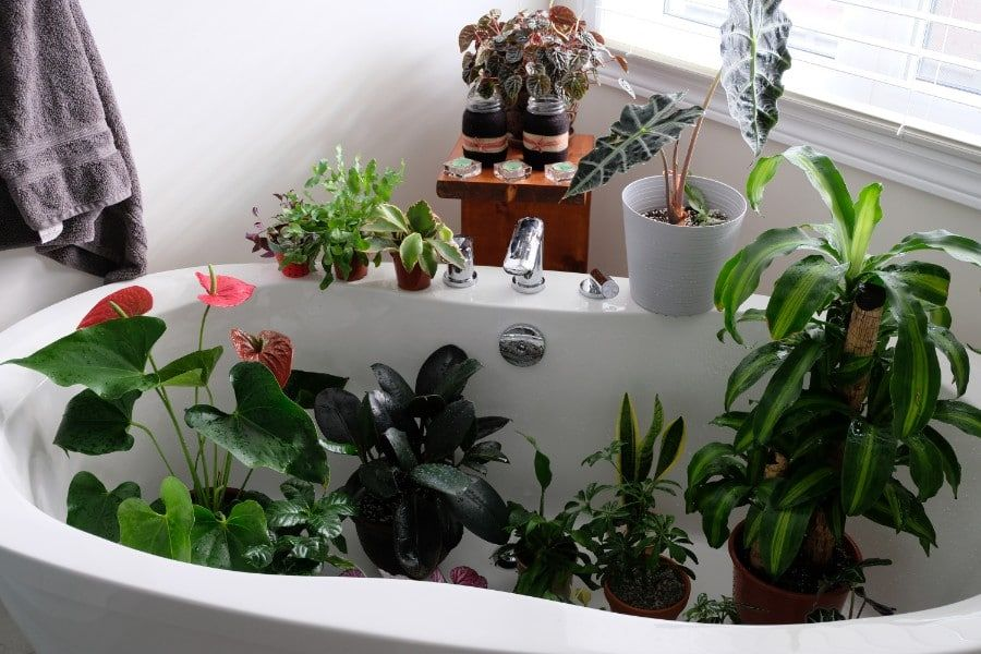 House Plants Indoor, How To Care For Houseplants While On Vacation