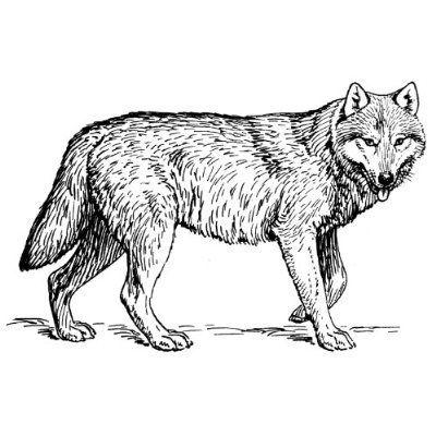 Wild Animals Coloring Books/Pages   Brandmalerei   Pinterest ...