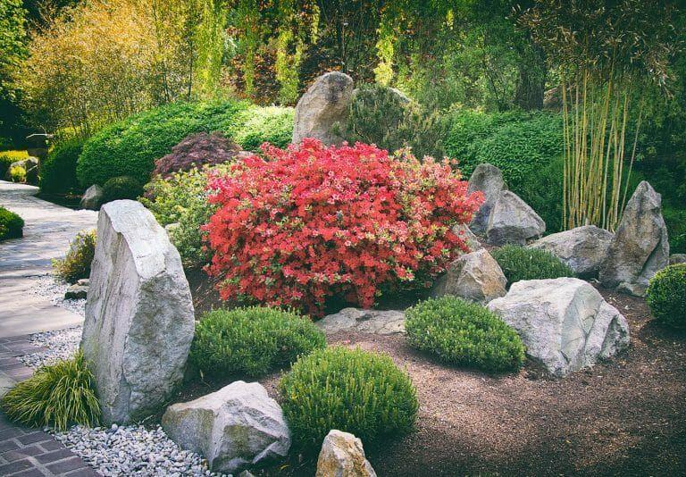 Best Bamboo Plants For Japanese Zen Gardens Lewis Bamboo Japanese Garden Plants Japanese Rock Garden Small Japanese Garden