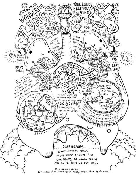 Respiratory System Coloring Page Anatomy Coloring Book Anatomy And Physiology Teaching Biology