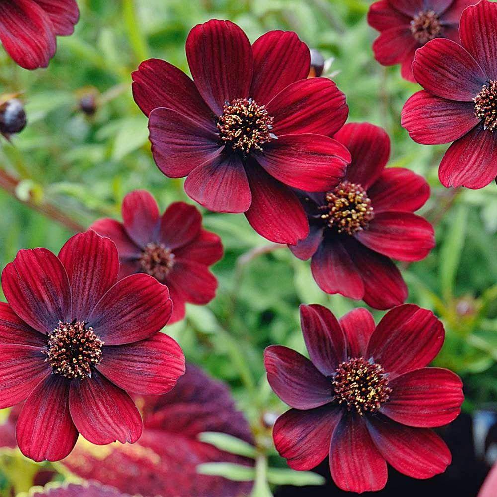 Form Follows Function Flower Garden Plants Annual Plants Plants