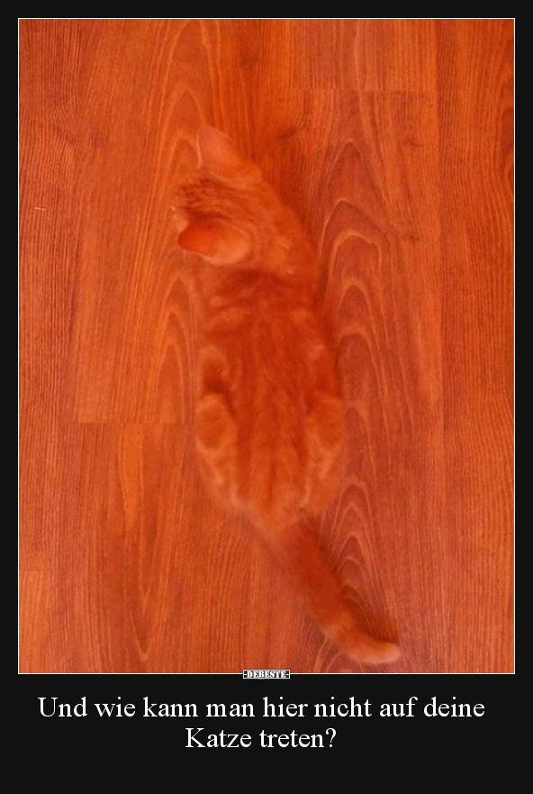Und wie kann man hier nicht auf deine Katze treten?..   Lustige Bilder, Sprüche, Witze, echt lustig