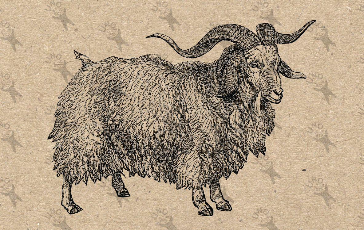 Farmyard Goat Iron On T-Shirt Transfer Print