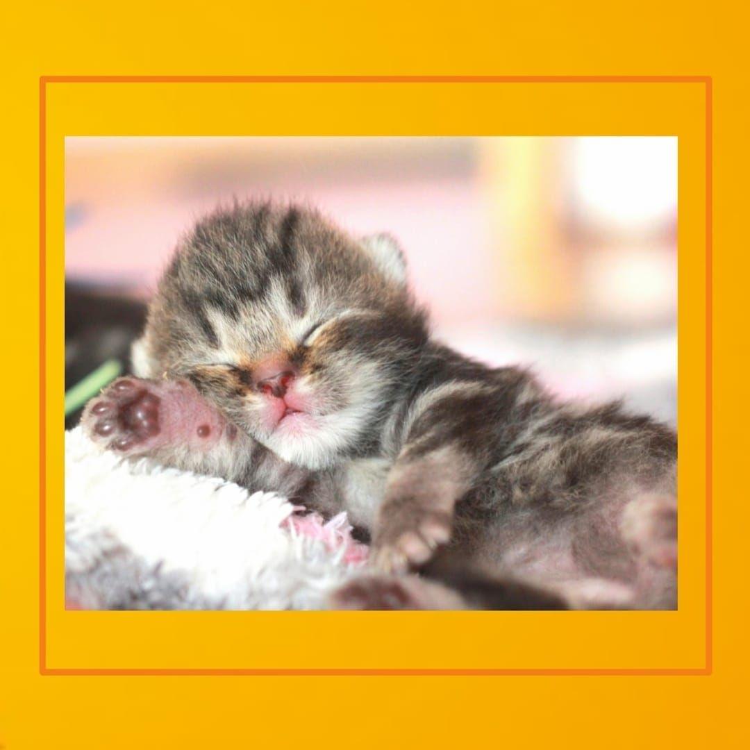 Cats Cat Catsofinstagram Cats Of Instagram Catsagram Catstagram Catlover Pets Instacat Catlovers Meow Kittens Kitten K Kitten Care Cat Day Kitten