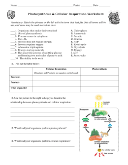 Photosynthesis & Cellular Respiration Worksheet | biology ...