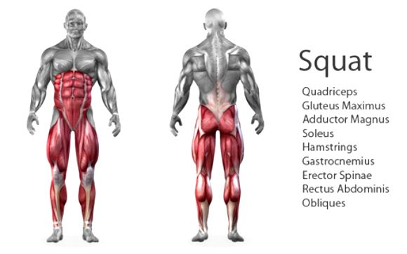 Image result for squat muscles worked image