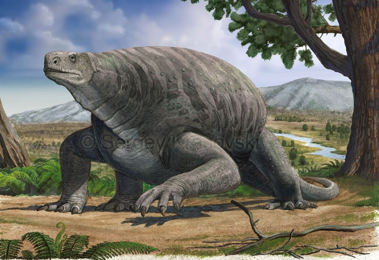 Cotylorhynchus by Sergey Krasovskiy, atrox1 | The best known member of the synapsid clade Caseidae, the largest terrestrial vertebrates of the Early Permian