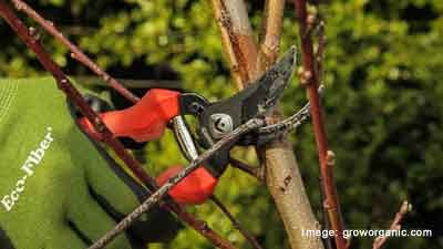 Tips On Choosing The Right Pruning Tool