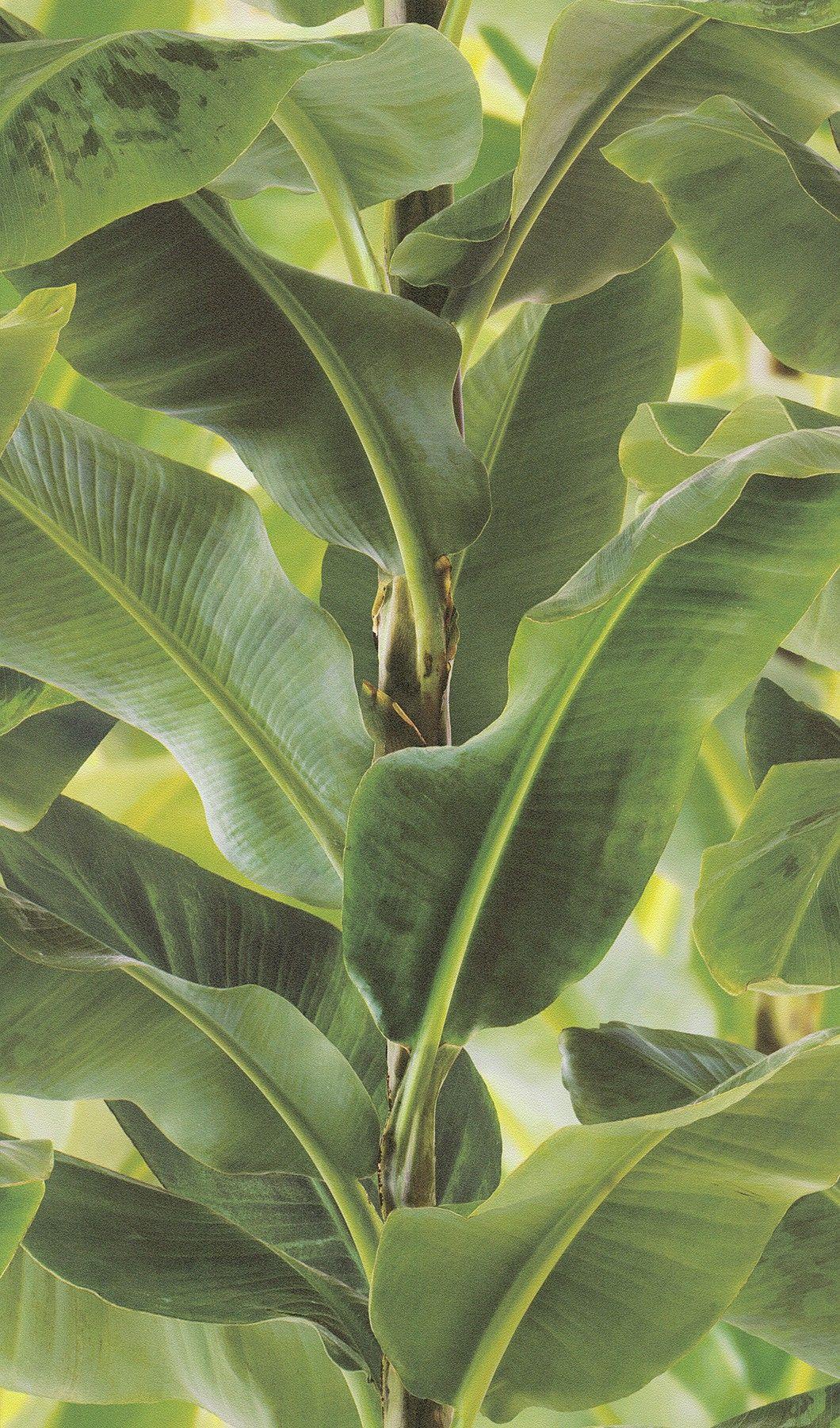 Vliestapete Grün Blätter Optik Struktur Rasch African Queen 2 473407 Grüner  Baum, Tapete Grün,