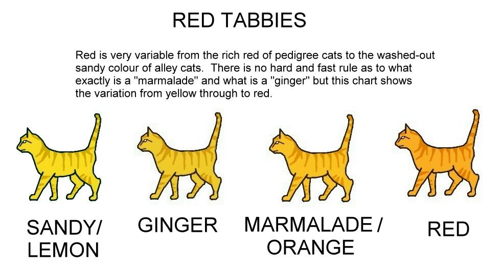 COLOUR AND PATTERN CHARTS ginger / red / orange tabby