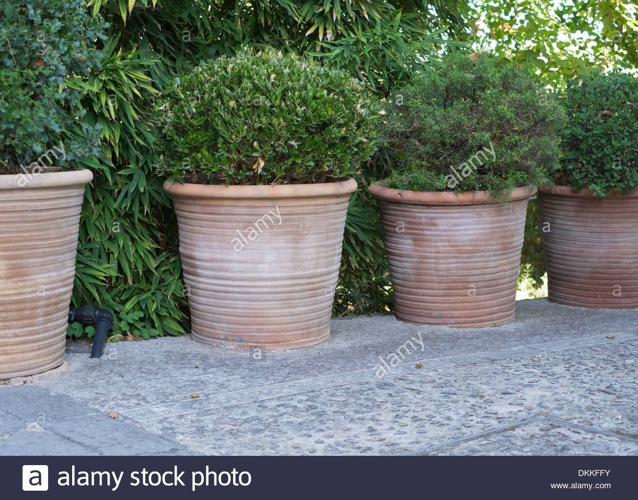 Four Large Terracotta Pots With Green Round Plants Majorca