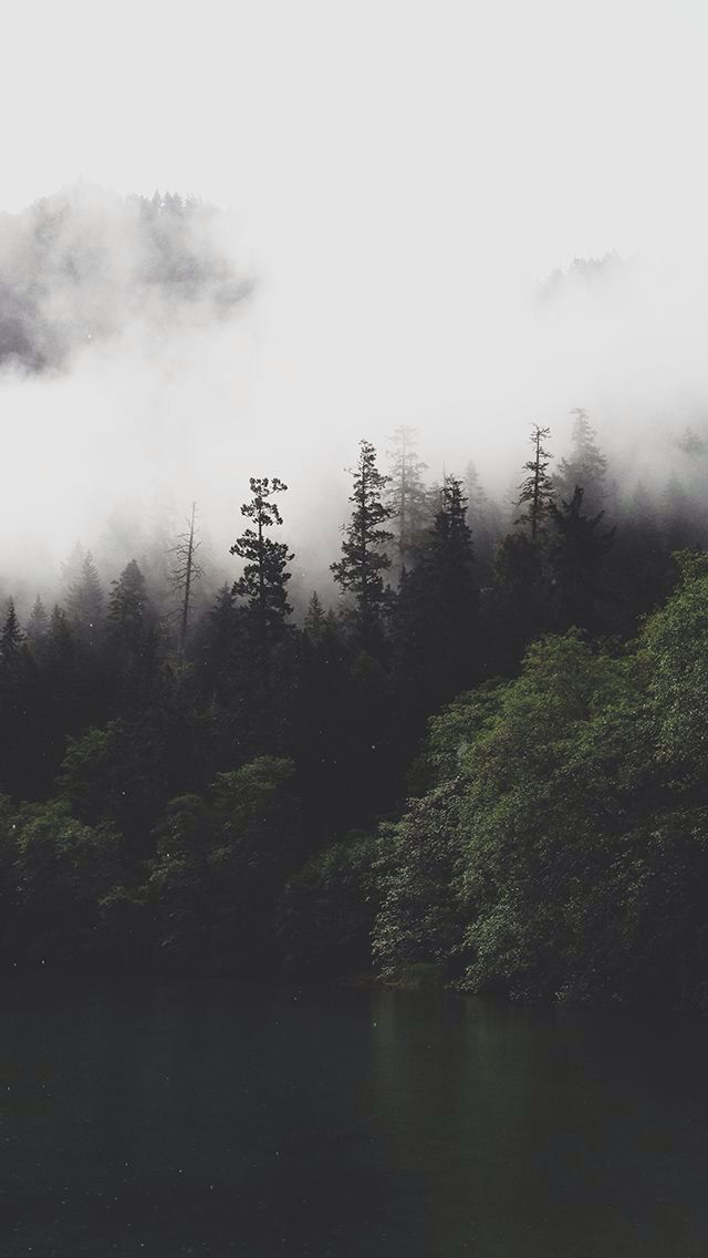 Foggy Forest Wallpaper Trees In 2019 Forest Wallpaper Iphone