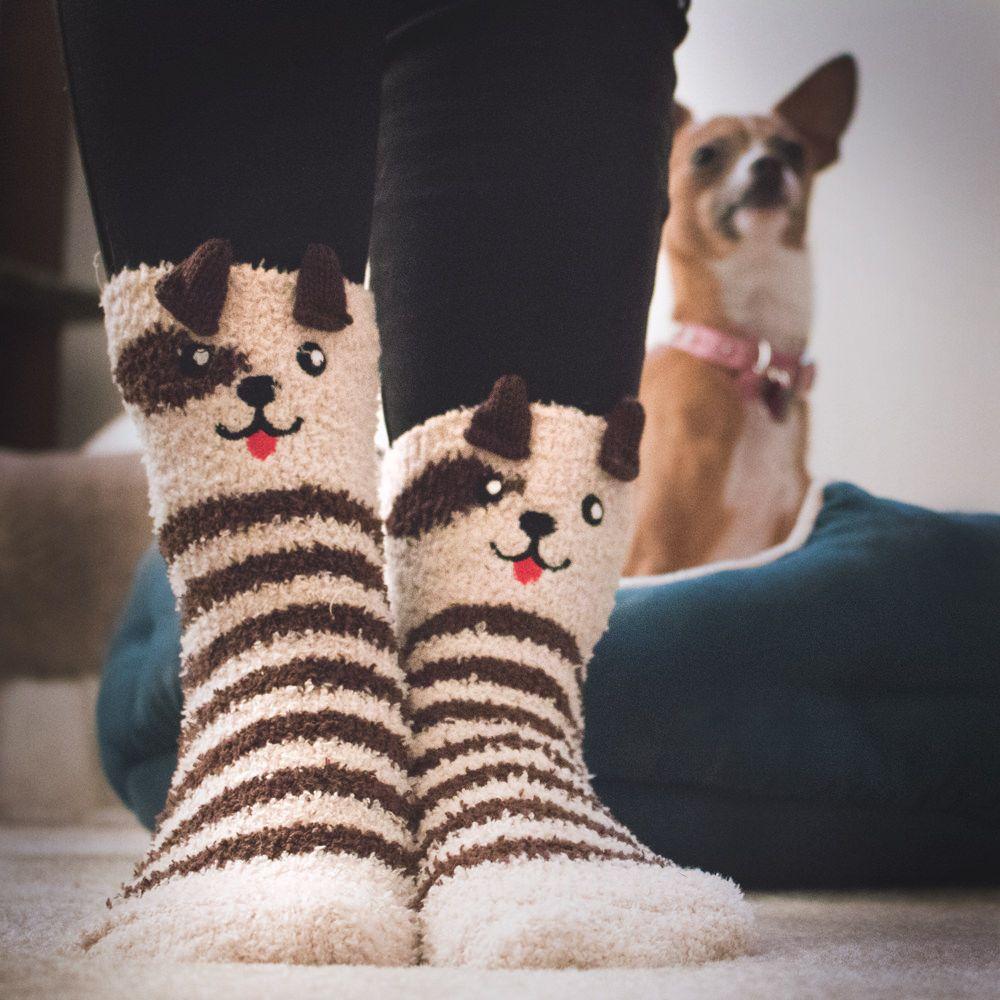 Make Pet Exercise More Fun Make Pet Exercise More Fun new pictures