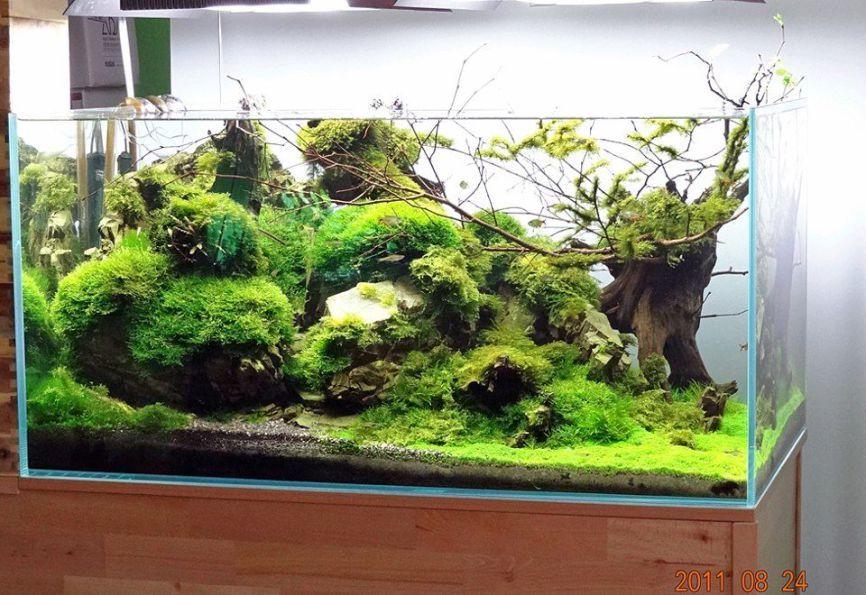 50 Aquascape Aquarium Design Ideas | Aquariums, Aquarium aquascape ...