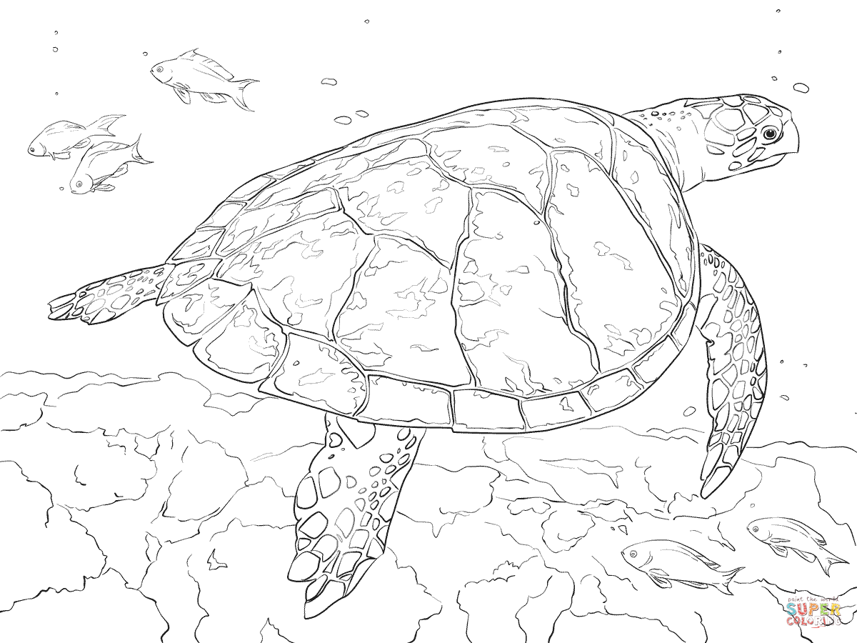 - Realistic Hawksbill Sea Turtle Coloring Page Free Printable