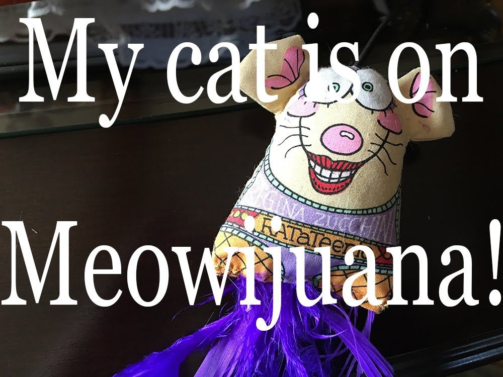 My cat is on meow-ijuana!