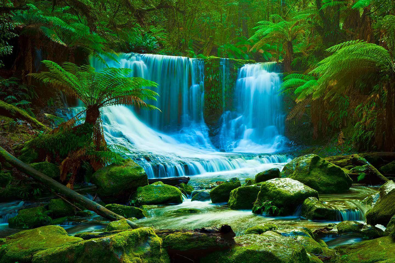 rainforest hd desktop wallpapers - photo #25