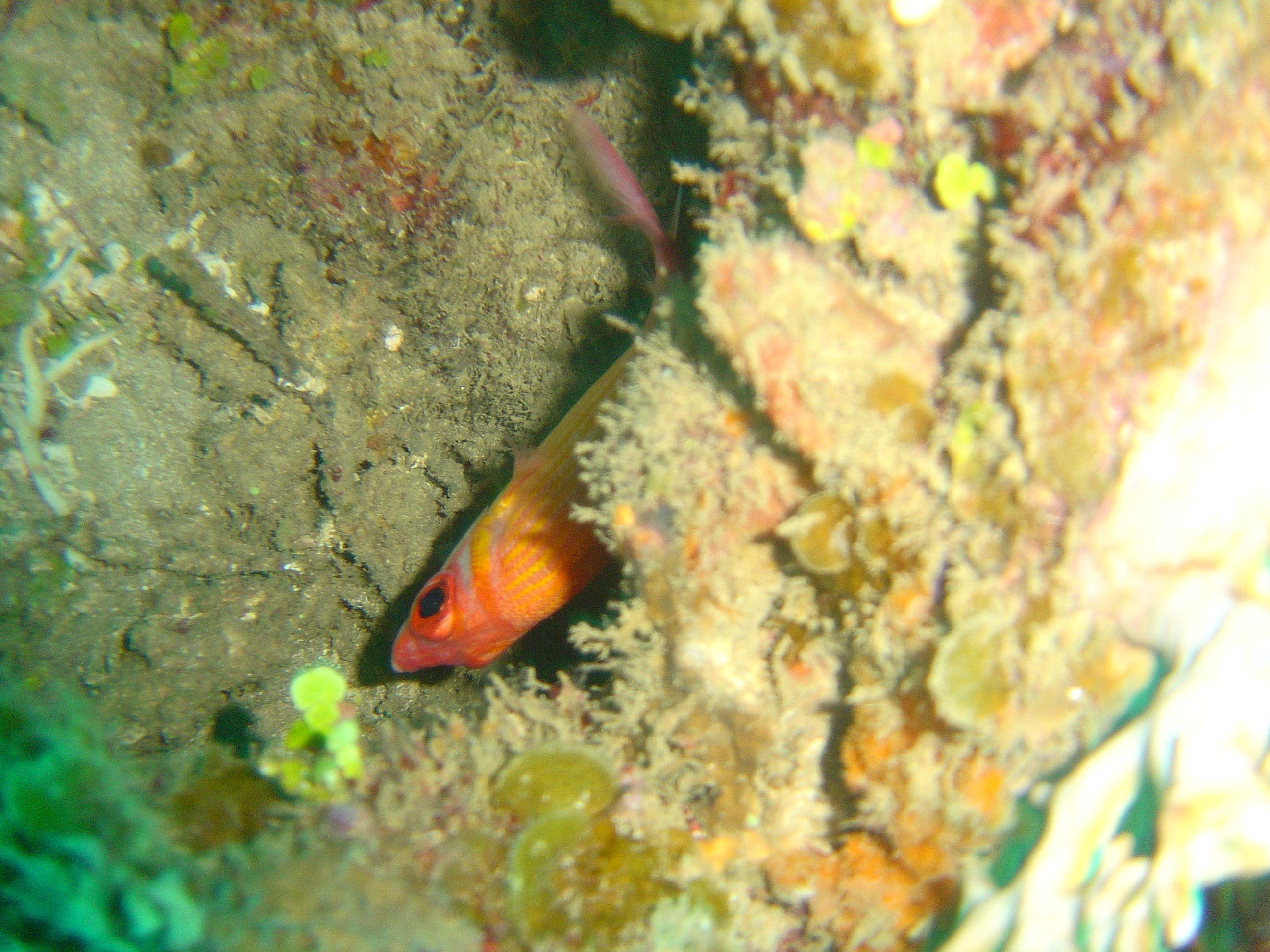 Diving in Martinique