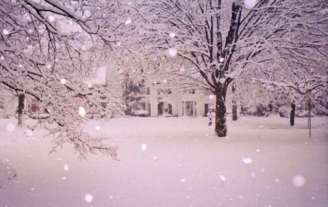 Snow #Christmas&winter❄