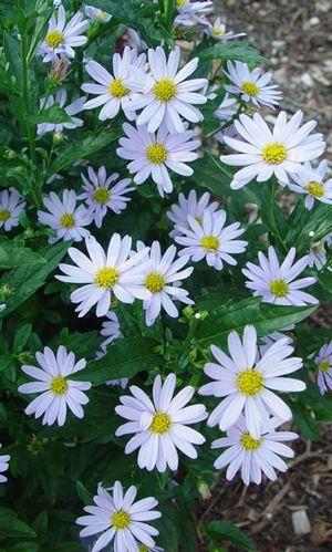 Pin Op Floralies Flowers