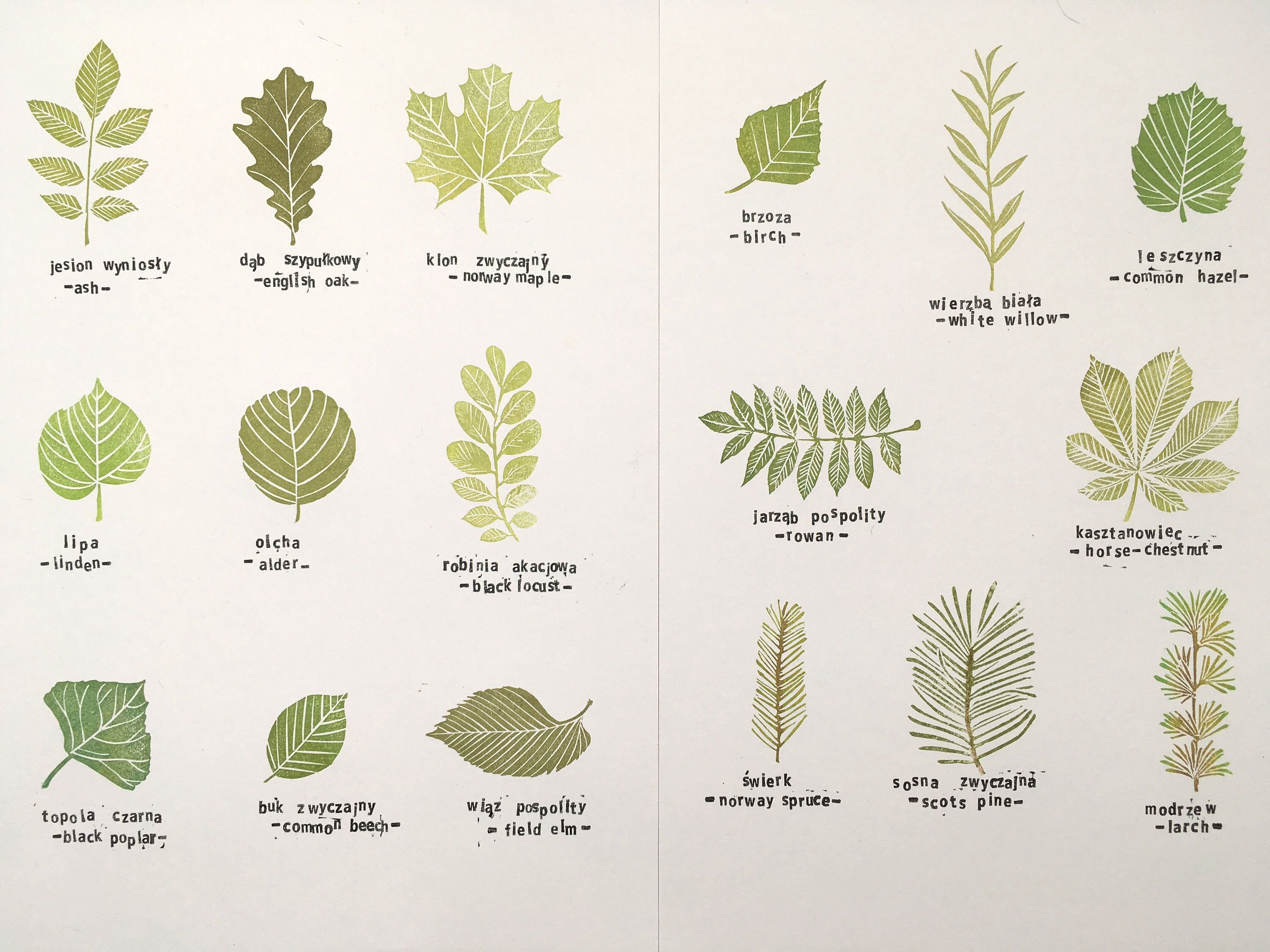 Common Tree Leaves Stamp Set Of 17 Specimens Hand Carved Stamp Botanical Montessori Supplies L Leaf Identification Tree Leaf Identification Tree Identification