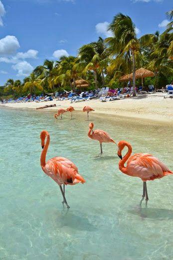 Flamingo Beach at Renaissance Island, Aruba.