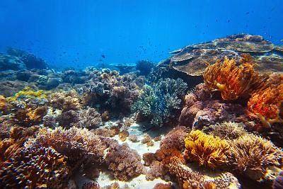 BioOrbis: Corais de águas quentes indicam estratégias de pre...