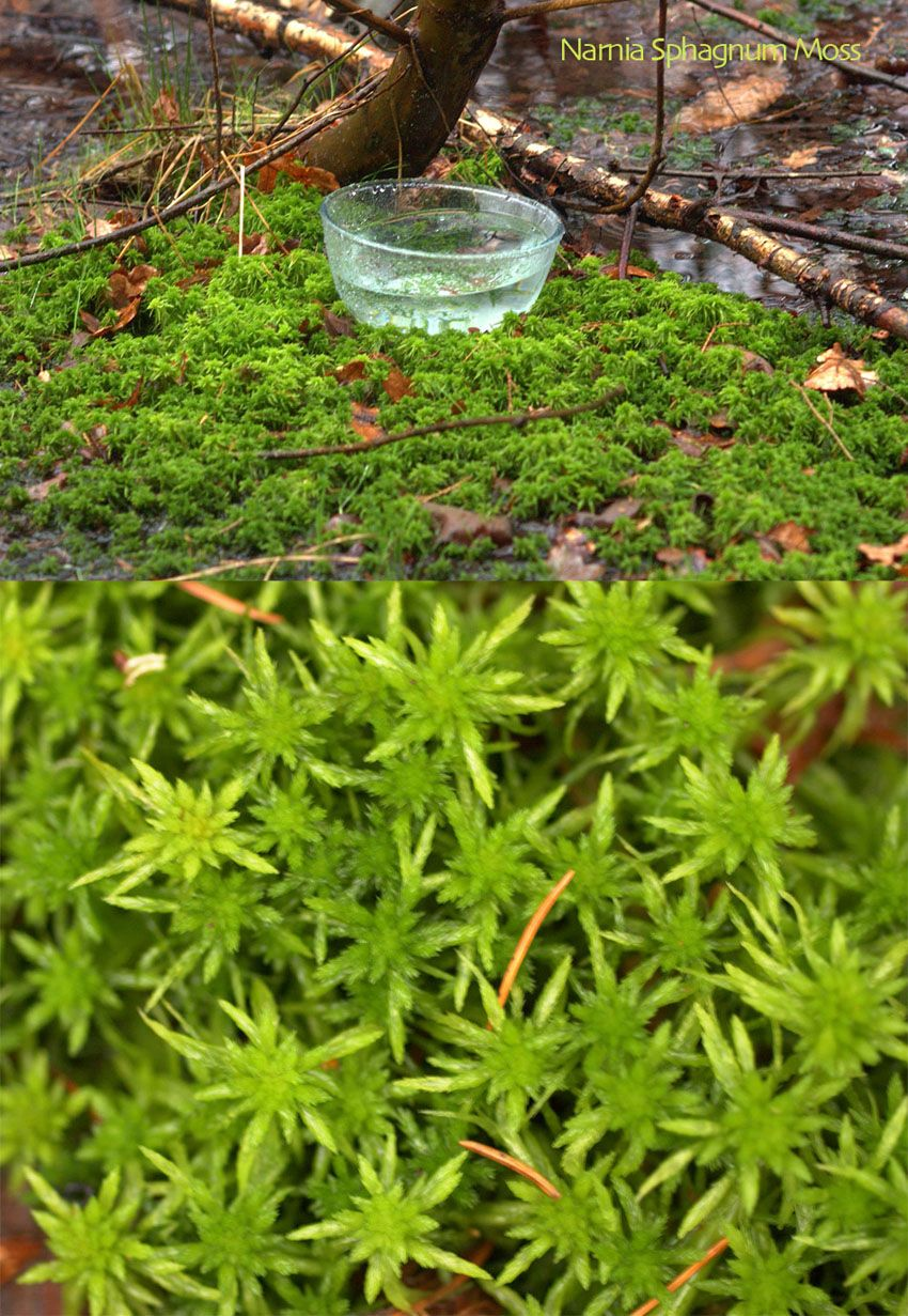 Narnia Sphagnum Moss At One Level The Effect Of This Essence Is That Of 1 Awakening The Chakras On The Soles Of The Flower Essences Beautiful Orchids Moss
