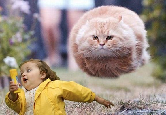 72e8ce85e21b80bfab2e1c3bc248f844 run little girl, the flying cat is coming for you lots o laughs