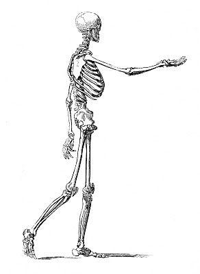 instant halloween art printable download - walking skeleton man +, Skeleton