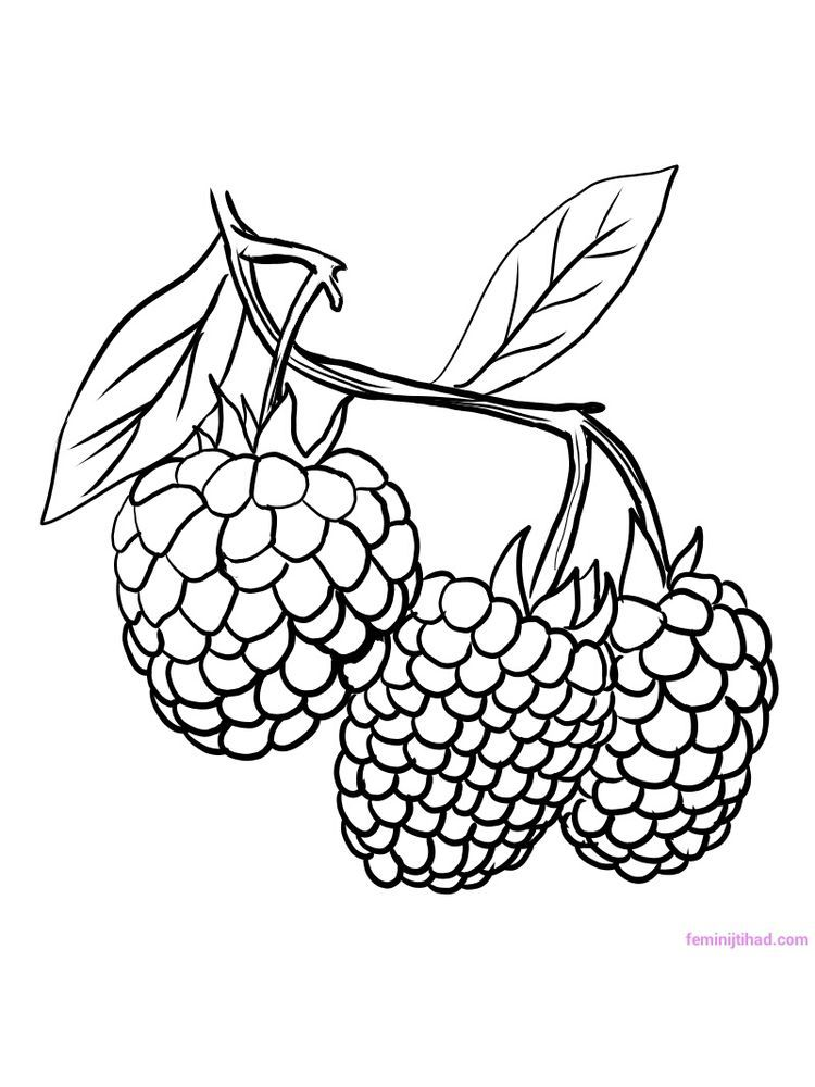 Grapes Fruits And Berries Coloring Pages For Kids Printable Free Fruit Coloring Pages Vegetable Coloring Pages Apple Coloring Pages