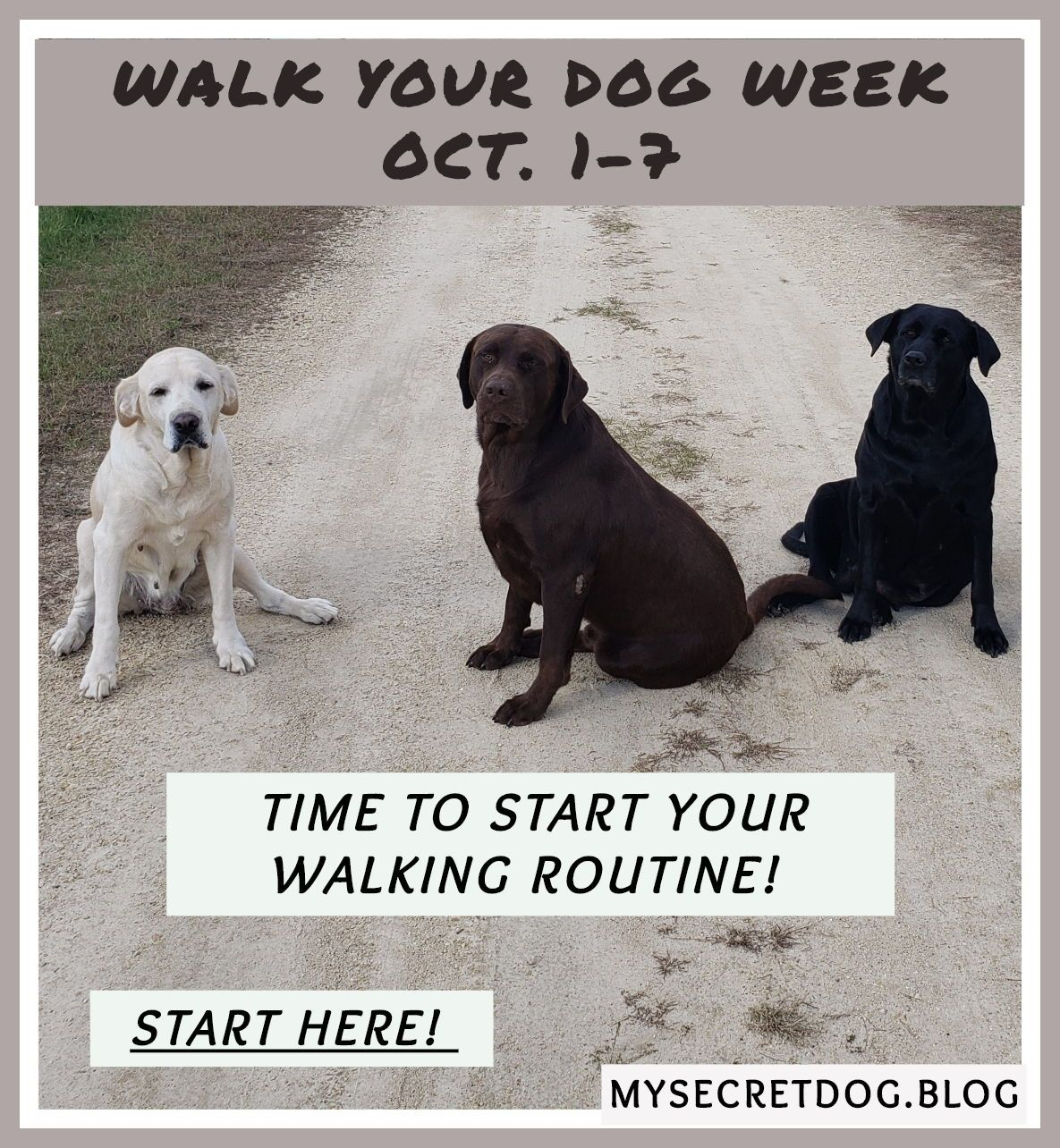 Dog Walking For Just 10 Minutes The Benefits For You And Your Dog