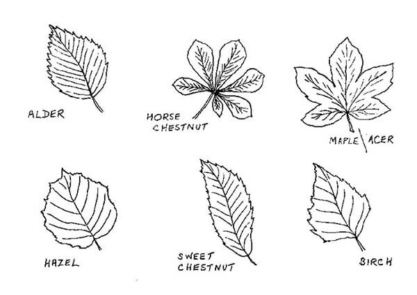 Leaves, Type of Falling Leaves Coloring Pages Type Of Falling - new coloring pages about science