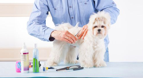 Calling All Pet Groomers Have Your Mastered The Upsell Pet Groomers Pet Grooming Dog Groomers