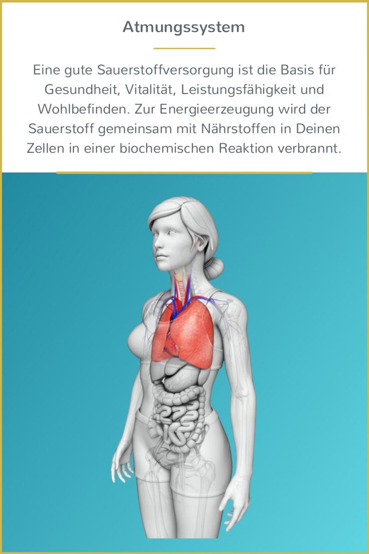 Großzügig Anatomie Und Physiologie Des Atmungssystems Video Fotos ...