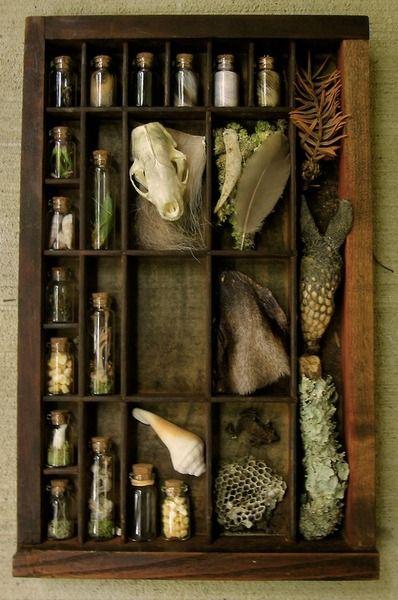 Oddities,  naturalist,  #skulls#taxidermy #curiosities