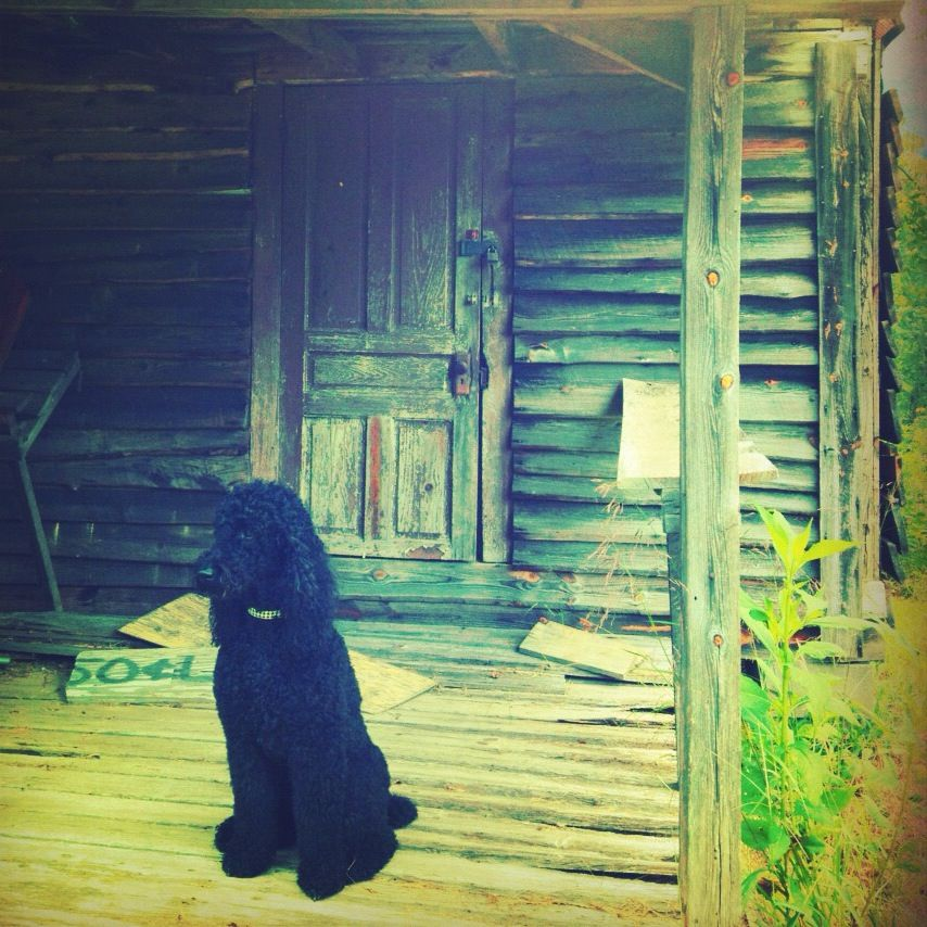 Charley at the Clampets old place