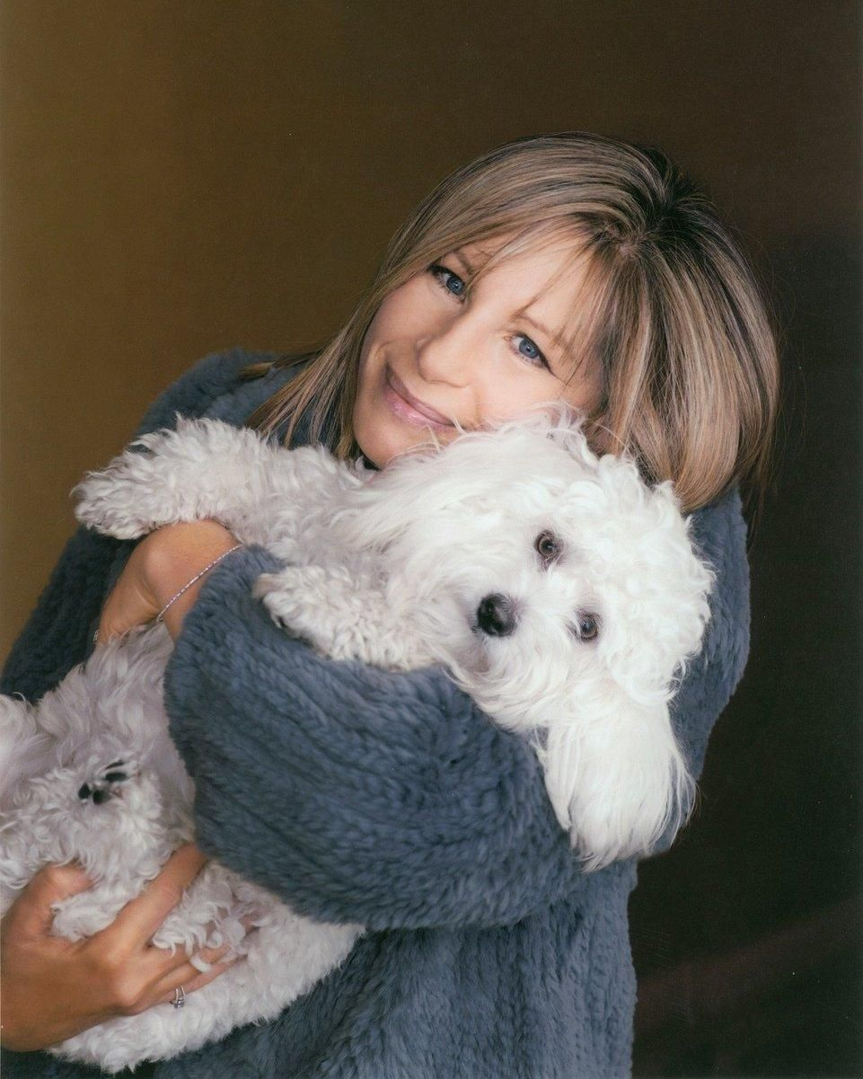 Barbra and Sammie 2014 Barbra streisand, Barbra, Coton