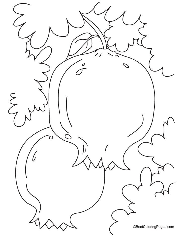 Two Pomegranate With Leaves Coloring Page With Images Coloring