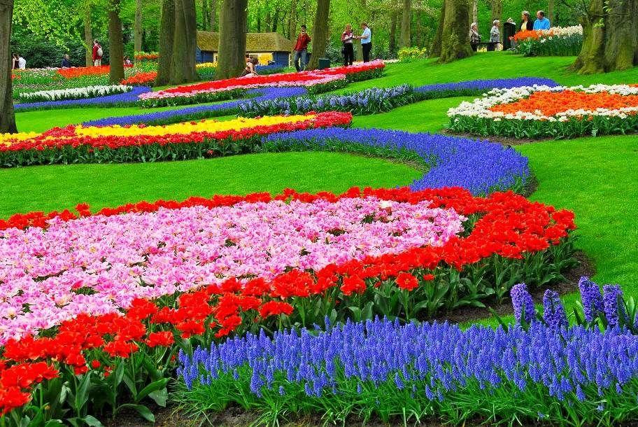 Gambar Bunga Tulip Kebun Tulip Dengan Gambar Desain Taman