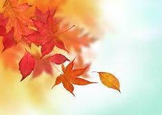 Colourful Autumn Falls stock photo