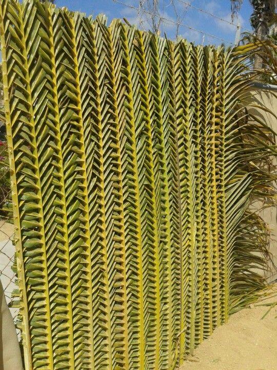 Braided Palm Wall Coconut Leaves Coconut Leaf Decor Leaf Decor
