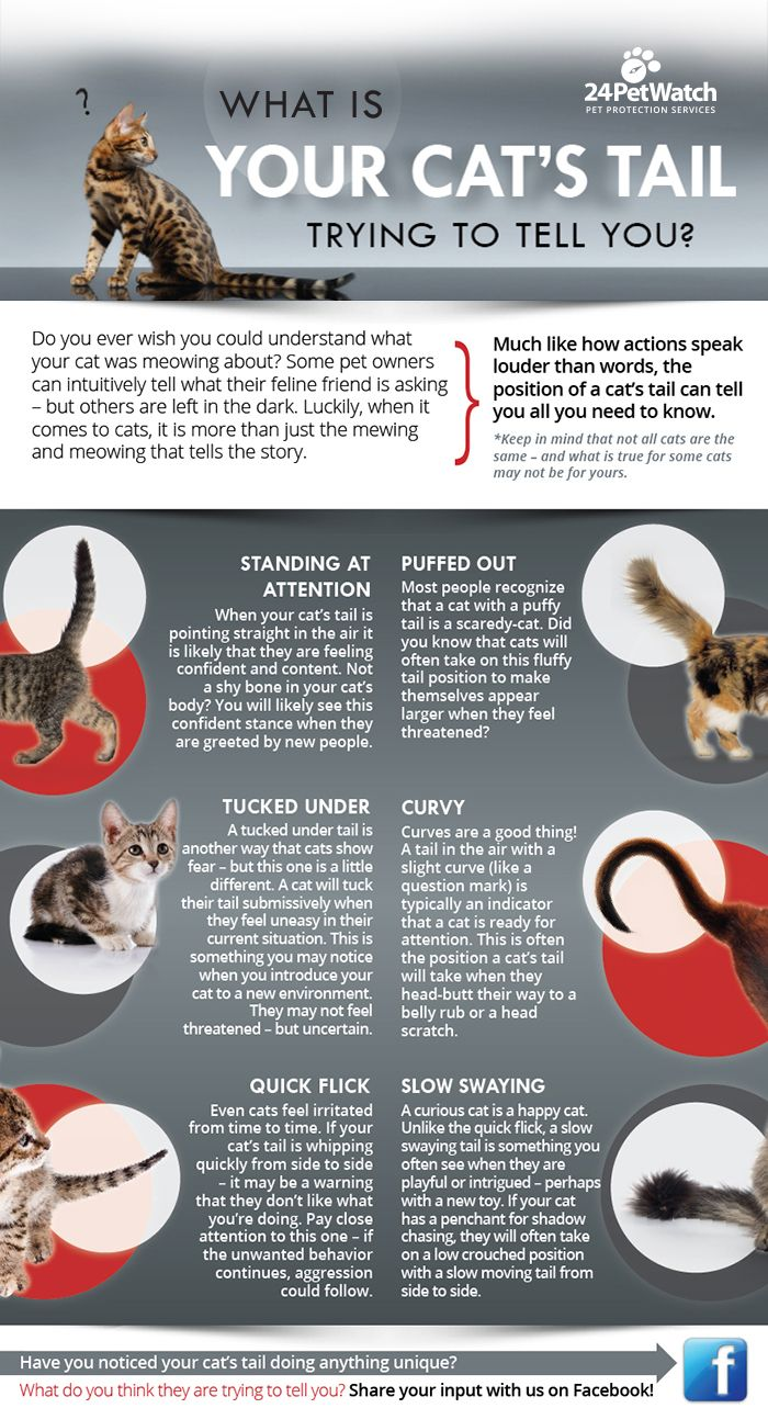 Pin By Allison Barilone On Good To Know Pet Insurance Cost Pet Insurance For Dogs Pet Insurance Quotes